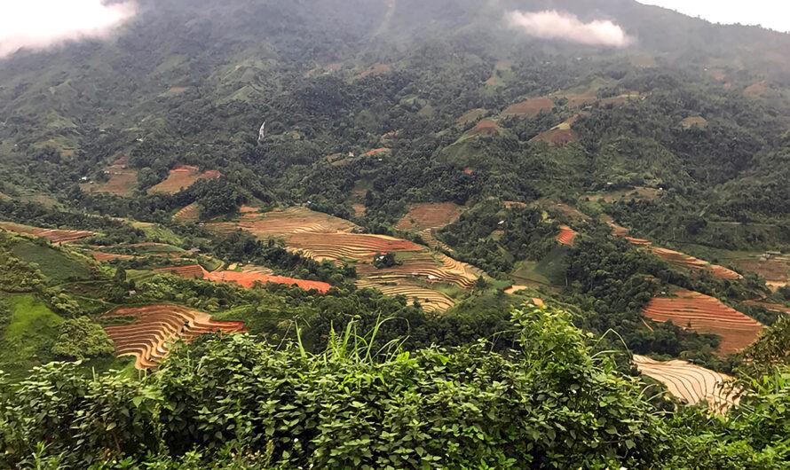 Terrassen aus Reis und Berge aus Mais