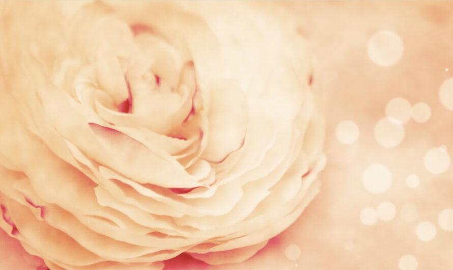 Bedingungslose Liebe – eine Provokation?
